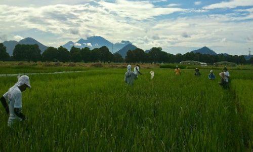 [Contribution] Cameroun : Quels freins à la micro-assurance agricole ?