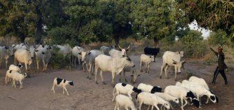 Conflit pastoral au Nigeria: deux soldats tués dans de nouvelles violences