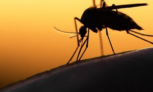 Paludisme : ALMA décerne le prix de l'excellence 2018 au Sénégal